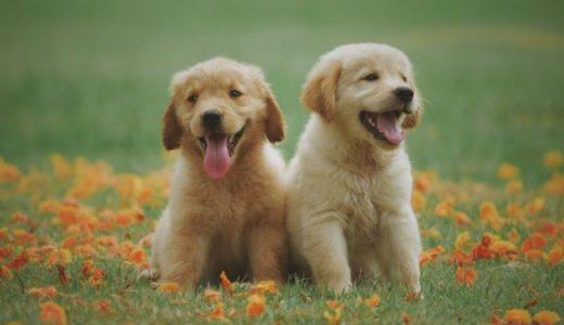 犬 の少子化の動物病院の開業への影響について