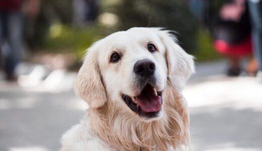 前代未聞の動物愛護管理法の改悪。2021年施行になれば、小動物業界はどんなダメージを受けるのか?