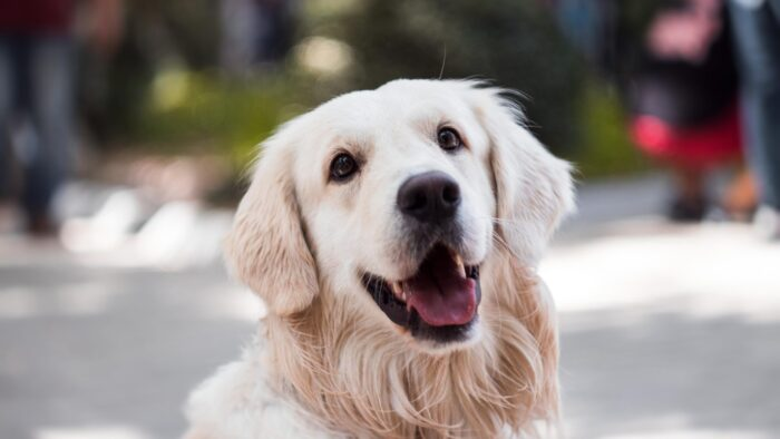 動物愛護法の改正についてのペットフード協会会長のコメント